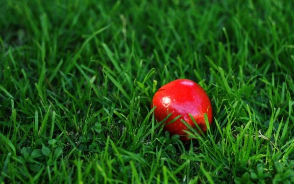Сочные зеленые яблоки Голден