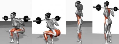 Мышцы, которые работают при приседании