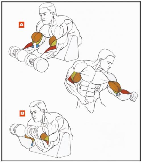 Какие мышцы работать при занятиях с гантелями?