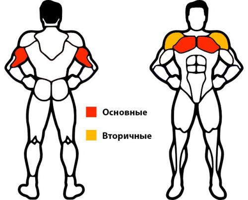 Какие мышцы работают при отжимании?