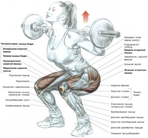 Мышцы при приседаниях