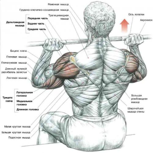Схема упражнения на плечи