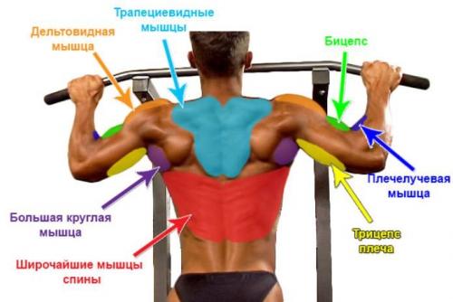 Мышцы, которые работают при подтягивании