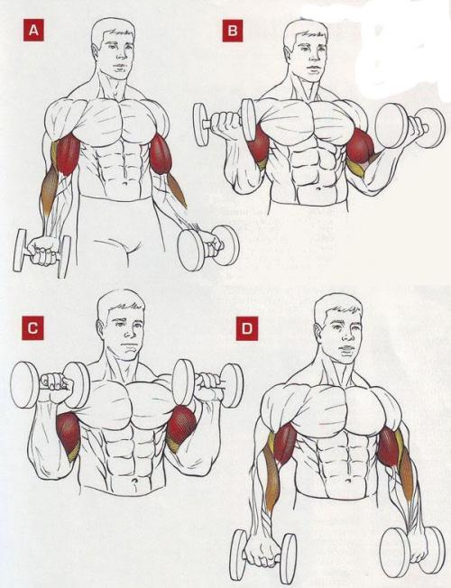 Упражнение с гантелей