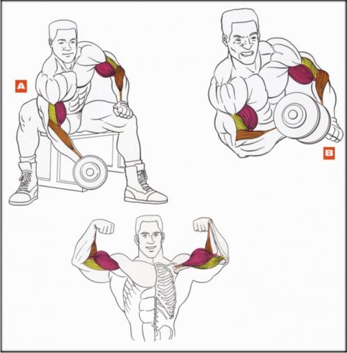 Схема правильного выполнения упражнения
