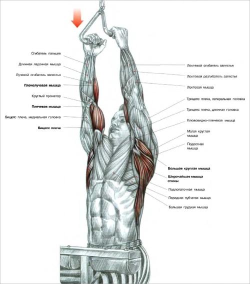Упражнение с узким хватом