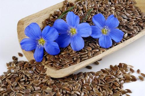 Семена льна и цветы